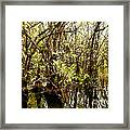 Florida Everglades 9 Framed Print