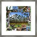 Florida Wildlife Photo Collage Framed Print