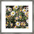 Flower Assault Framed Print