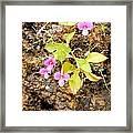 Flower On Rocks Framed Print
