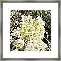 Flowers - 0052 Framed Print