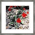 Flowers-23 Framed Print