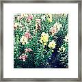 Flowers At Noon Framed Print