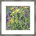 Flowers In Charlottenburg Palace Garden Framed Print
