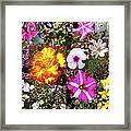 Flowers In Stephanie's Garden Framed Print