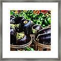 Food - Farm Fresh - Eggplant And Peppers Framed Print