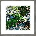 Forest And Stream 2 Framed Print