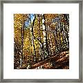 Forest Fall Colors 4 Framed Print
