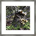 Forest Fungi Framed Print