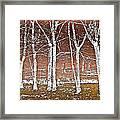 Forest Ghosts Framed Print