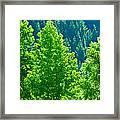 Forest Illuminates In The Sunlight  Framed Print