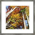 Forest In Autumn Bavaria Germany Framed Print
