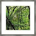 Forest In Denmark Framed Print