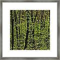 Forest In Spring Foliage, Six Mile Lake Framed Print