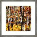Forest Of Gold Framed Print
