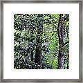 Forest Trees Framed Print
