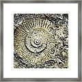 Fossil Geology Framed Print