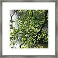 Fountain Behind Tree Branches Framed Print