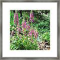 Foxgloves In My Garden Framed Print
