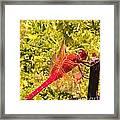 Friendly Dragon Fly Framed Print