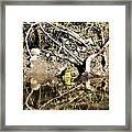 Frog King Framed Print