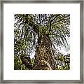From The Ground Up Framed Print