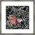 Frosted Leaf Framed Print