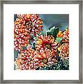 Frosted Mums Framed Print