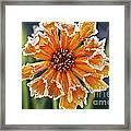 Frosty Flower Framed Print