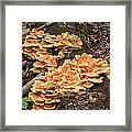 Fungus Framed Print