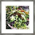 Garden Bowl Of Foliage Framed Print