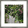 Garden Fence With Roses Framed Print by Elena Elisseeva