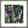 Garden Flowers 1 Framed Print