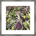 Garden Of Colors Framed Print