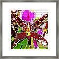 Garden Orchid Framed Print