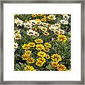 Gazania Gazania Rigens Flowers Framed Print