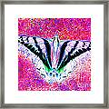 Ghost Butterfly Framed Print by Nick Gustafson