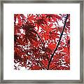 Glorious Red Framed Print