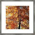 Glory Of Autumn Framed Print by Jennifer Compton