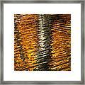 Gold Reflection Framed Print