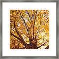 Golden Autumn View Framed Print