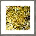 Golden Canopy Framed Print by Rick Berk