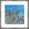 Golden Crepe Myrtle Seeds Framed Print