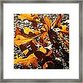 Golden Oak Shadows Framed Print