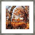 Golden Oaks Framed Print