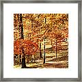 Golden Path Framed Print