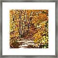 Golden Trail Framed Print