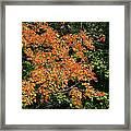 Golden Tree Moment Framed Print