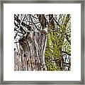 Goose Tree Framed Print
