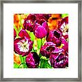 Gorgeous Tulips Framed Print